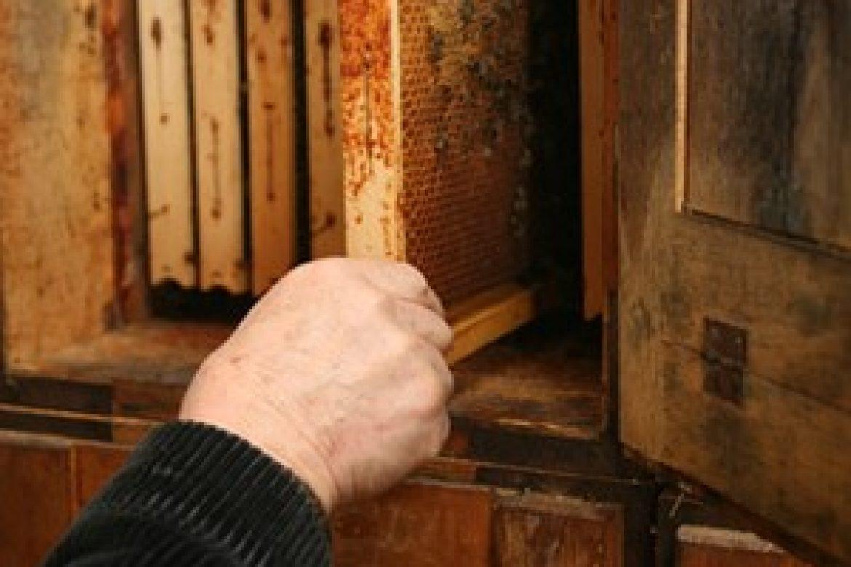 Osnovni pčelinji proizvodi